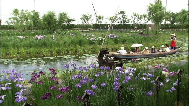Sightseers on board a Sappa boat cruising the riverside district of the Sawara City Aquatic Botanical Garden to enjoy Japan irises in various colors...
