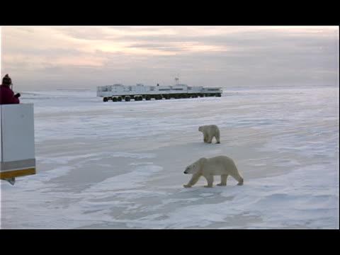 sightseers watch polar bears from tundra buggies. - 水の形態点の映像素材/bロール