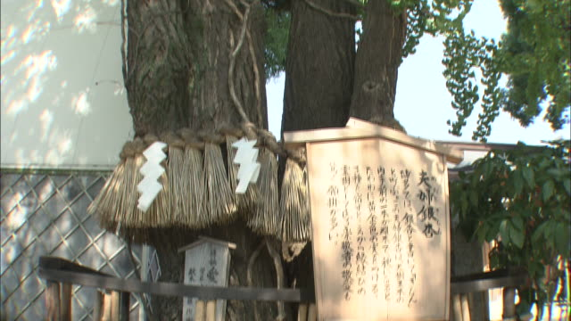 """a sign indicates """"man and wife's ginkgo"""" at the kushida shrine in japan. - shimenawa stock videos & royalty-free footage"""