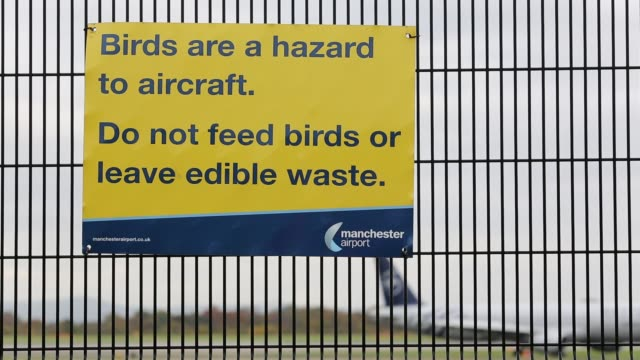 sign on the perimeter fence at manchester airport, asking plane spotters not to feed birds. - at the edge of stock videos & royalty-free footage