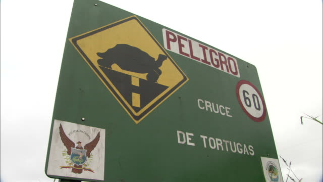 a sign warns drivers of a turtle crossing. - animal crossing sign stock videos & royalty-free footage
