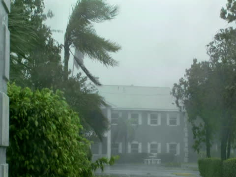 Signs and trees being blown in rain by hurricane force winds, Hurricane Wilma, USA