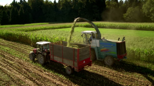 HD: Silage Harvester Cutting The Corn