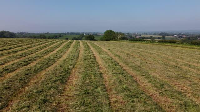 サイレージ作り、春の最初の作物 - 干し草点の映像素材/bロール