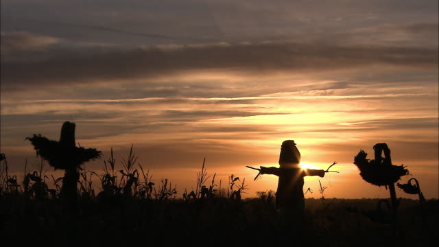 Silhoetted scarecrow at sunset, Norfolk, UK