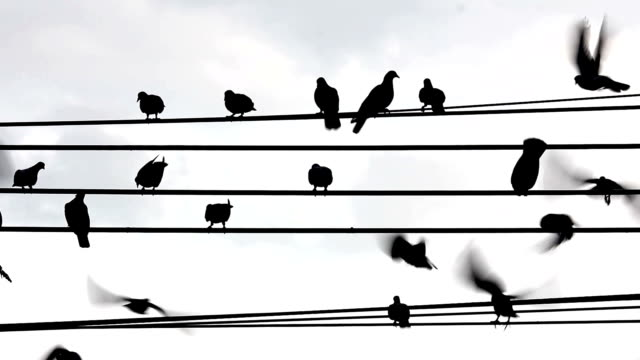 silhouette bird on electricity wire - steel cable stock videos & royalty-free footage