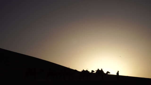 silhouette: camels walking on desert at sunset