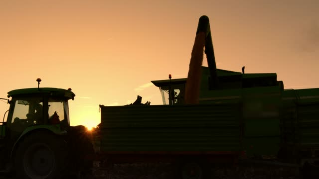 silhouette combine harvester filling trailer with harvested corn at sunset,slow motion - agricultural machinery stock videos and b-roll footage