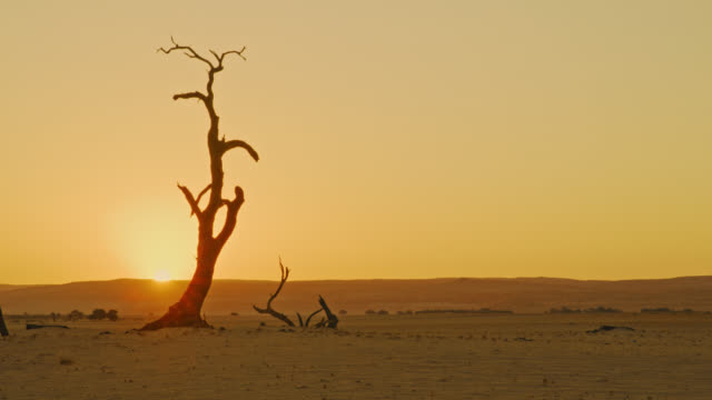 ws silhouette deadvlei tree in vast tranquil desert at sunset,namibia,africa - tropical tree stock videos & royalty-free footage