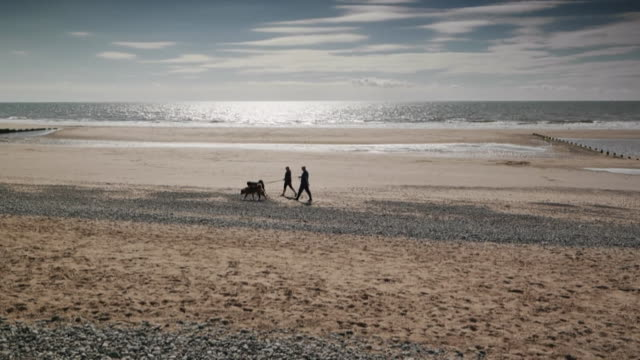 silhouette dog walkers on beach - dog walking stock videos & royalty-free footage