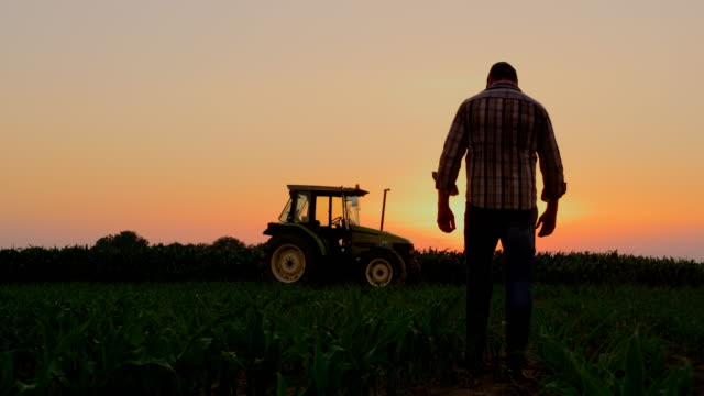 la silhouette farmer examining plants on a field at sunset - tractor stock videos & royalty-free footage