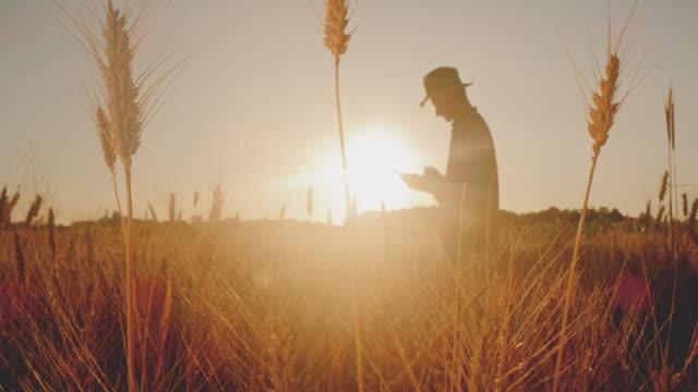 在田間使用數位平板電腦的農民的 ds 剪影 - 一分鐘或更長 個影片檔及 b 捲影像