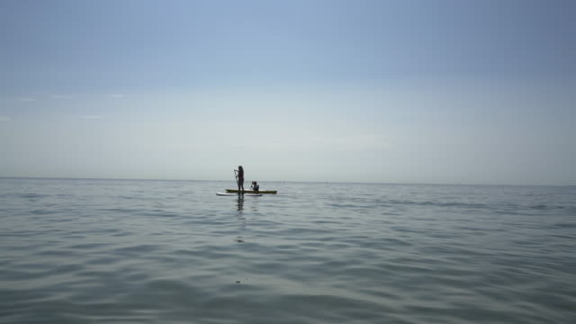 silhouette of a paddle boarder. - bournemouth england stock videos & royalty-free footage