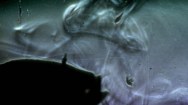 silhouette of a small fish feeding on plankton - magnification stock videos & royalty-free footage