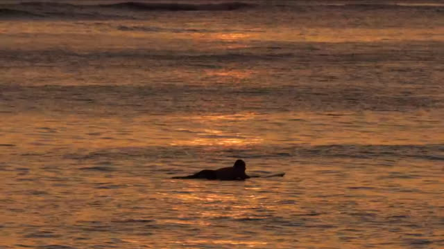 vidéos et rushes de silhouette of a surfer at sea during a beautiful sunset - oahu