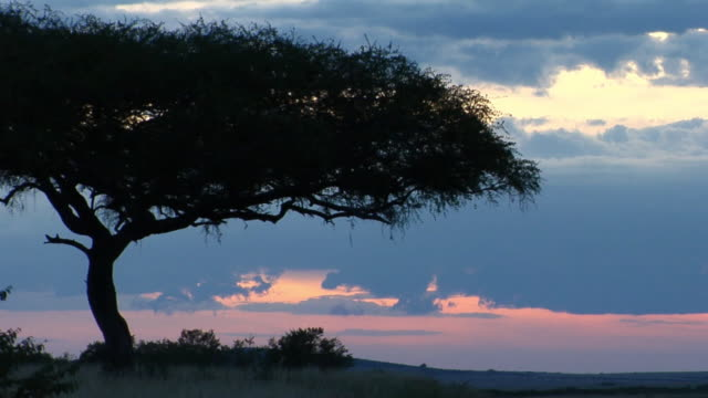 WS, Silhouette of acacia tree against sky at sunset, Masai Mara Game Reserve, Rift Valley, Kenya