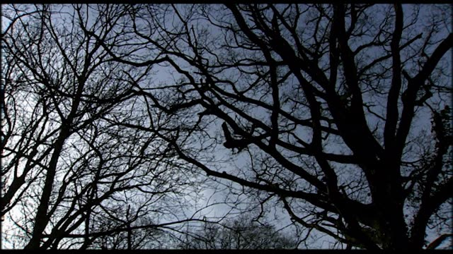 vidéos et rushes de silhouette of bare tree branches against blue sky - arbre sans feuillage