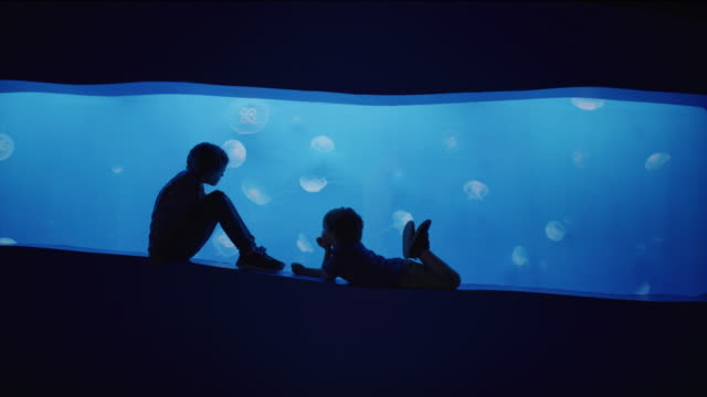 Silhouette of boy and girl watching jellyfish swimming in aquarium / Draper, Utah, United States