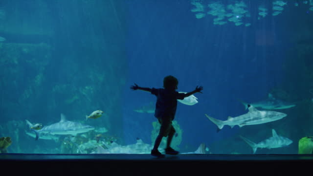 silhouette of boy in aquarium watching sharks and fish swimming / draper, utah, united states - 水族館点の映像素材/bロール