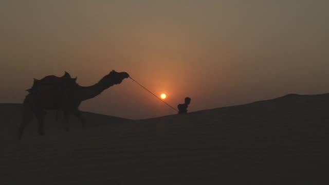 vídeos de stock e filmes b-roll de ws, silhouette of boy (12-13) leading camel in sam desert at sunset, jaisalmer, rajasthan, india - animal de trabalho