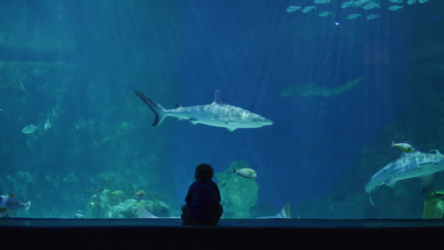 vídeos de stock e filmes b-roll de silhouette of boy sitting in aquarium watching sharks and fish swimming / draper, utah, united states - tubarão