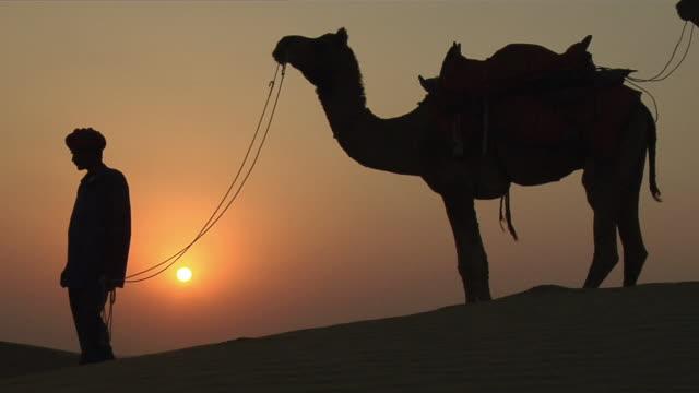 ms, silhouette of boy (12-13) with camel in sam desert at sunset, jaisalmer, rajasthan, india - 12 13 år bildbanksvideor och videomaterial från bakom kulisserna