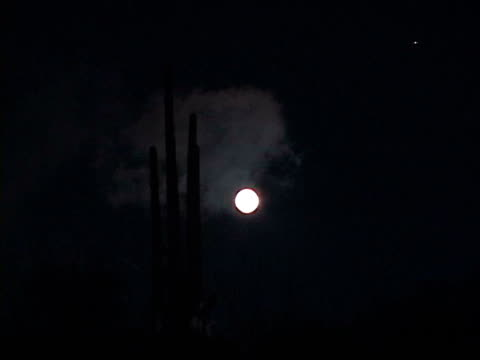 ws, silhouette of cactus against black sky with full moon, arizona, usa - cactus silhouette stock videos & royalty-free footage