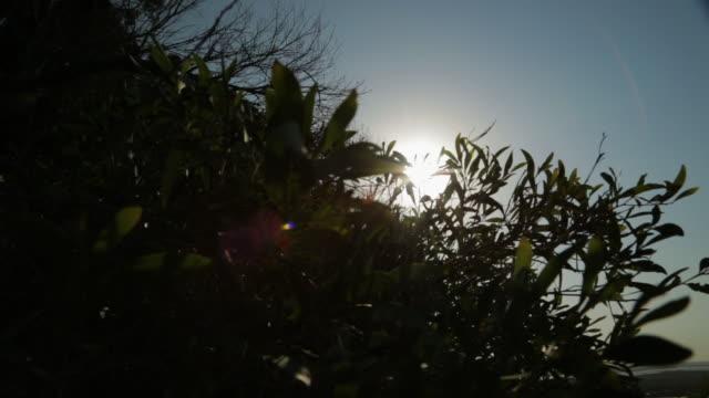 vídeos de stock, filmes e b-roll de silhouette of coast plants, qld island, australia - moving activity