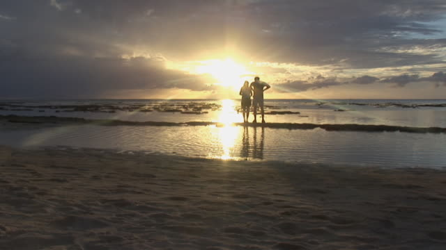 vídeos de stock, filmes e b-roll de ws, silhouette of couple on beach at sunset, rear view, moorea island, tahiti, french polynesia - fan palm tree