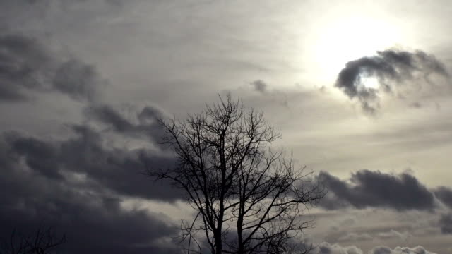 silhouette of dead tree blowing in wind against dark brooding clouds. - bare tree stock videos & royalty-free footage