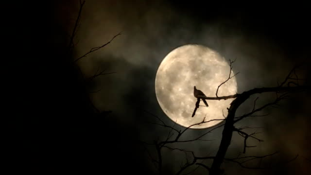 silhouette of doves flying to sit on the branches and full moon at night with bright and dark clouds background - gothic style stock videos & royalty-free footage
