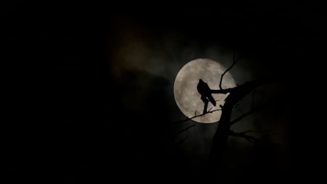 silhouette of doves sit on the branches and full moon at night with bright and dark clouds background - gothic style stock videos & royalty-free footage