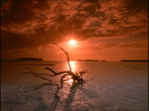 vídeos de stock, filmes e b-roll de silhouette of driftwood on beach at sunset - taiti
