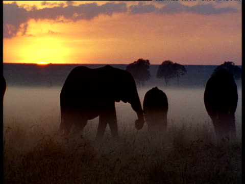 silhouette of elephants in mist at sunrise - orange colour stock videos & royalty-free footage