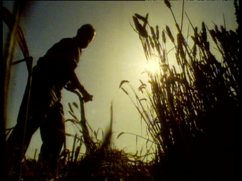 stockvideo's en b-roll-footage met silhouette of farmer cutting wheat with scythe. - cereal plant