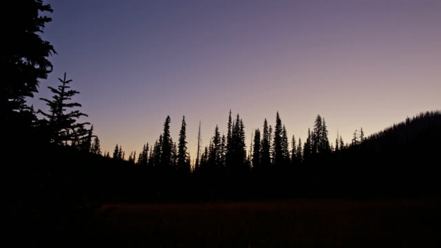 Silhouette of forest at dawn over meadow Elk Meadow on Mt. Hood