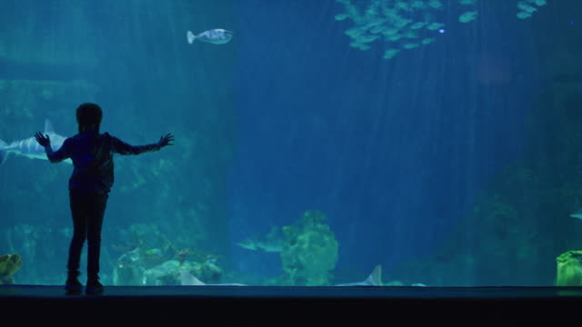 silhouette of girl in aquarium watching sharks and fish swimming / draper, utah, united states - aquarium stock videos & royalty-free footage