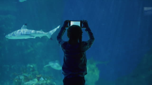 vídeos de stock, filmes e b-roll de silhouette of girl recording fish swimming in aquarium using cell phone / draper, utah, united states - celular com câmera