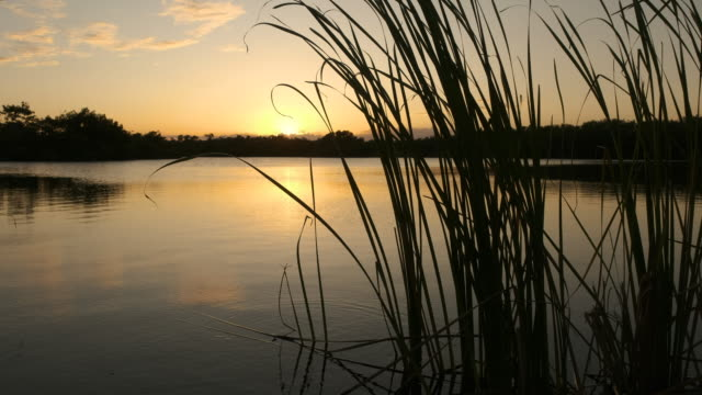 silhouette of grass by lake at sunrise - südliche bundesstaaten der usa stock-videos und b-roll-filmmaterial