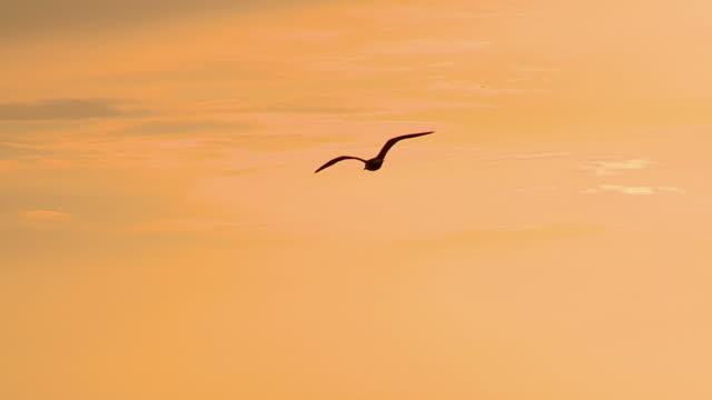slo mo ws ts silhouette of gull soaring over sea at sunset, cres, croatia - カモメ科点の映像素材/bロール