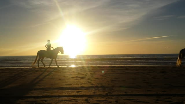 vídeos y material grabado en eventos de stock de silhouette of horses walking in the beach sunset - caballo familia del caballo