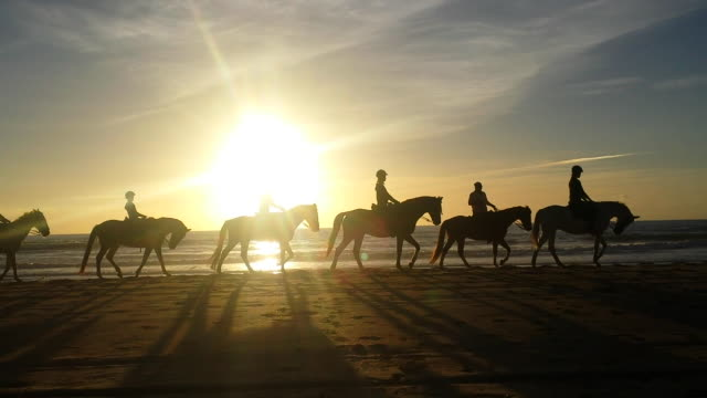 silhouette of horses walking in the beach sunset - cádiz stock videos and b-roll footage