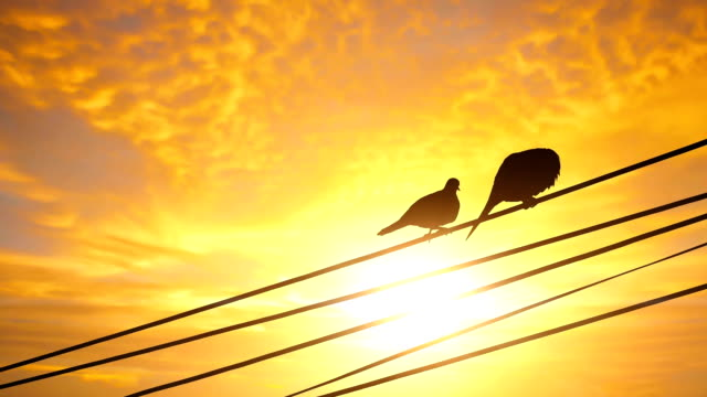 silhouette of love bird couple - nightingale stock videos & royalty-free footage