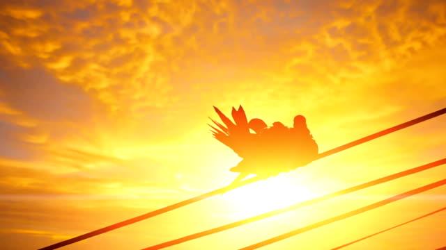 silhouette of love bird couple - nightingale bird stock videos & royalty-free footage