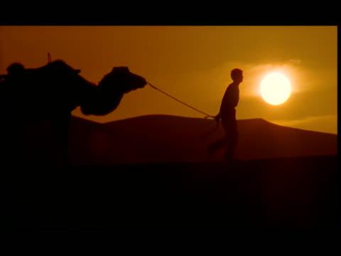 ms, silhouette of man leading camels across desert at sunset, gobi desert, china - kleine gruppe von tieren stock-videos und b-roll-filmmaterial