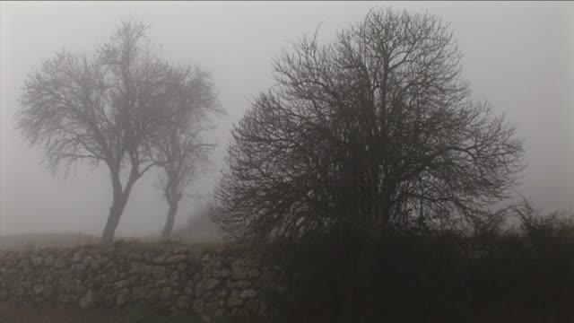 vídeos y material grabado en eventos de stock de ws, silhouette of man walking in foggy landscape, stone wall and bare tree in foreground, pancorbo, burgos, spain - bare tree