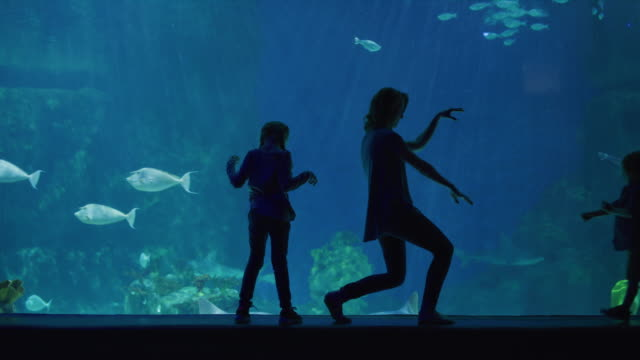 silhouette of mother and children playing near glass in aquarium / draper, utah, united states - 水族館点の映像素材/bロール