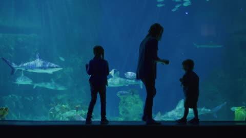 silhouette of mother and children playing near glass in aquarium / draper, utah, united states - europäischer abstammung stock-videos und b-roll-filmmaterial