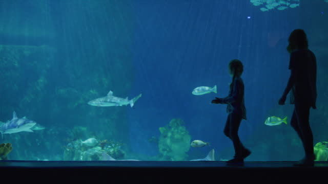 silhouette of mother and children walking near glass in aquarium / draper, utah, united states - holiday event stock videos & royalty-free footage