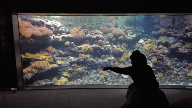 WS Silhouette of mother and son (2-3) looking at fishes in aquarium / Paris, France